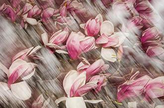 Flowing Flower
